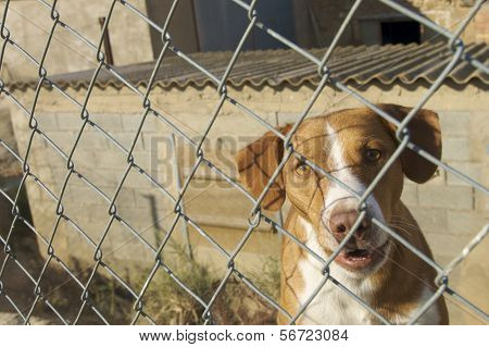 watchdog after a metal fence