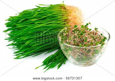 Wheat Germ With Radish Germ On Plate
