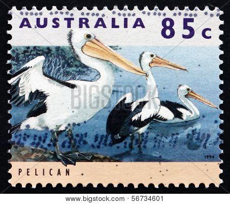 Postage Stamp Australia 1994 Pelican, Water Bird