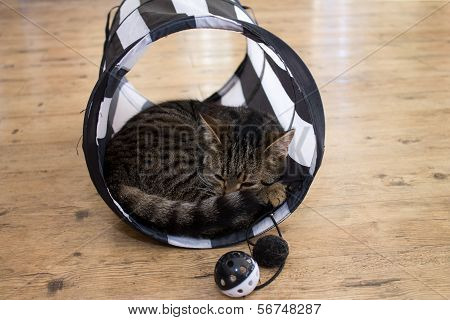 Grey striped cat lying in play tunnel