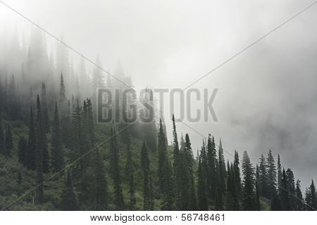 Foggy Mountain In Glacier National Park