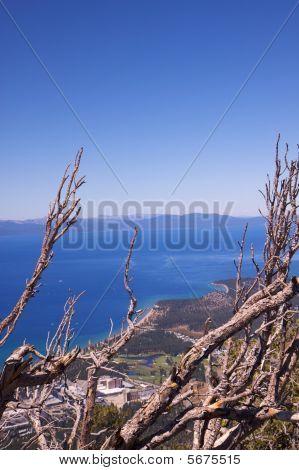 Dead Trees Lake Tahoe