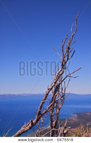 Isolated Dead Tree Lake Tahoe