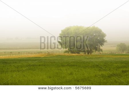 Tree Behind A Farm