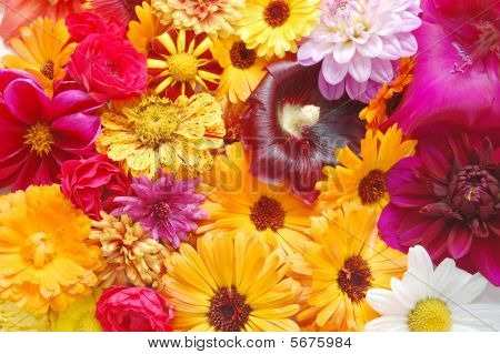 Multi Colored  Flowers Pattern Background