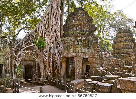 Prasat Ta Prum or Ta Prohm Temple complex, near Siem Reap, Cambodia.