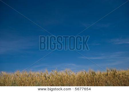 Paesaggio cielo e grano