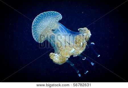 Transparent blue jellyfish