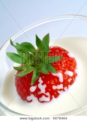 Juicy Strawberry Plunging Into Glass Of Milk