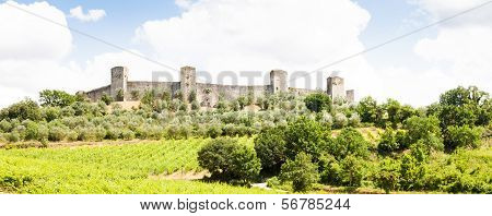 Wineyard In Tuscany
