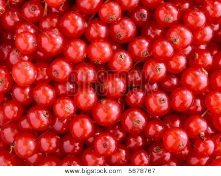Red Currants Texture
