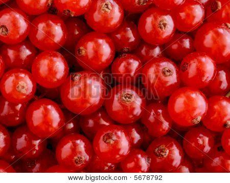 rote Johannisbeeren Textur