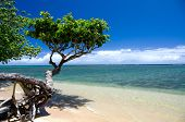 image of heliotrope  - Beautiful small heliotrope tree cast a shadow over water at Anini beach North shore Kauai