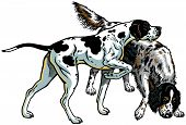 stock photo of english setter  - english pointer and setter gun dog breeds - JPG