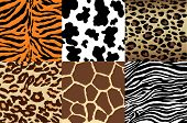 pic of camoflage  - Animal Print backgrounds - JPG