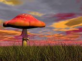 image of fairy-mushroom  - One fairy red mushroom in the green grass by colorful cloudy sunset - JPG