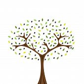 pic of olive branch  - Vector image of olive tree isolated on white - JPG