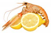 pic of norway lobster  - A single langoustine shellfish with lemons - JPG