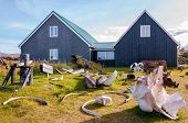 pic of iceland farm  - White Whale bones in Dj - JPG
