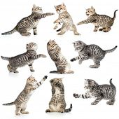 stock photo of tabby cat  - tabby kittens isolated collection - JPG