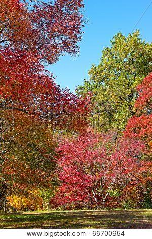 Colorful autumn.