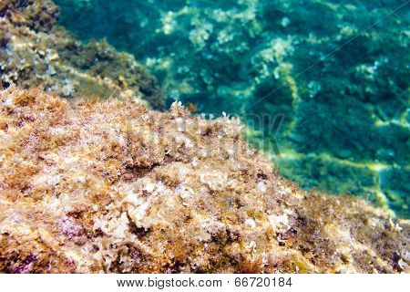 marine life, Cap de Peyrefite, Languedoc-Roussillon, France