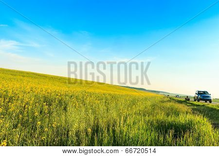 Highway And Canola Field On Blue Sky Background