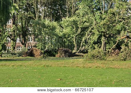 Fallen Trees Blown Over By Heavy Winds At The Park