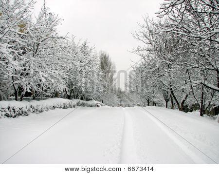 Snow-clad road