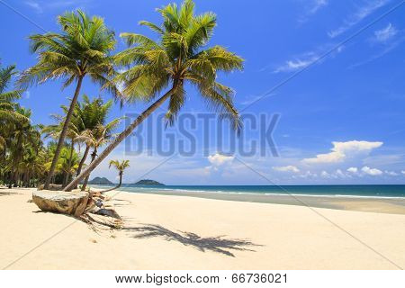 Atilt Coconut Tree With Stone