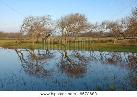 Bolgheri Landscape