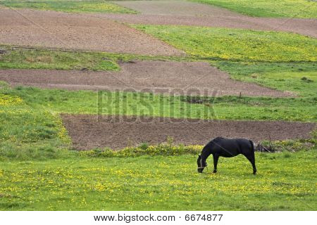 horse and fields