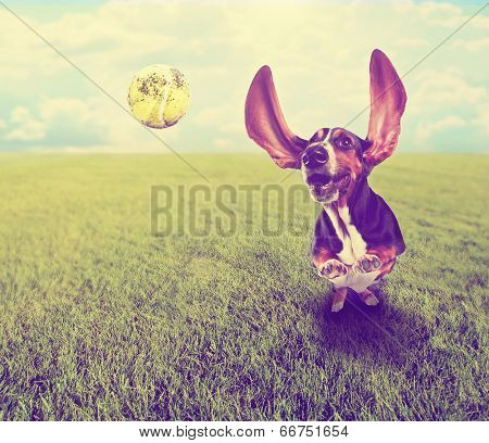 a cute basset hound chasing a tennis ball in a park or yard on the grass done with a retro vintage instagram filter