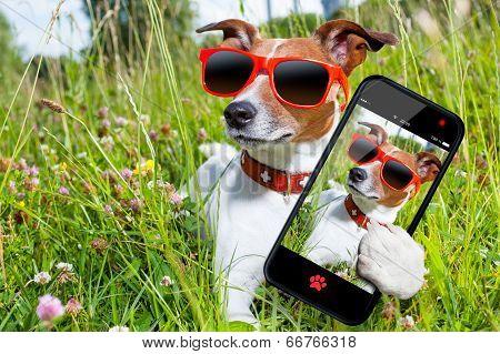 Selfie Dog In Meadow