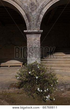 Column And  Bush