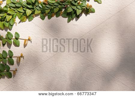 Vines On White Wall