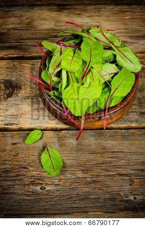 Salad Mangold