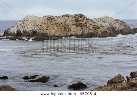 seals and birds on a rock