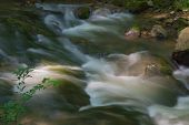 stock photo of brook trout  - Sun beams on a wild mountain trout stream in Virginia - JPG