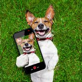 foto of selfie  - super funny face dog lying on back on green grass and laughing out loud taking a selfie - JPG