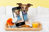 picture of bed breakfast  - dog taking a selfie in bed in the morning - JPG