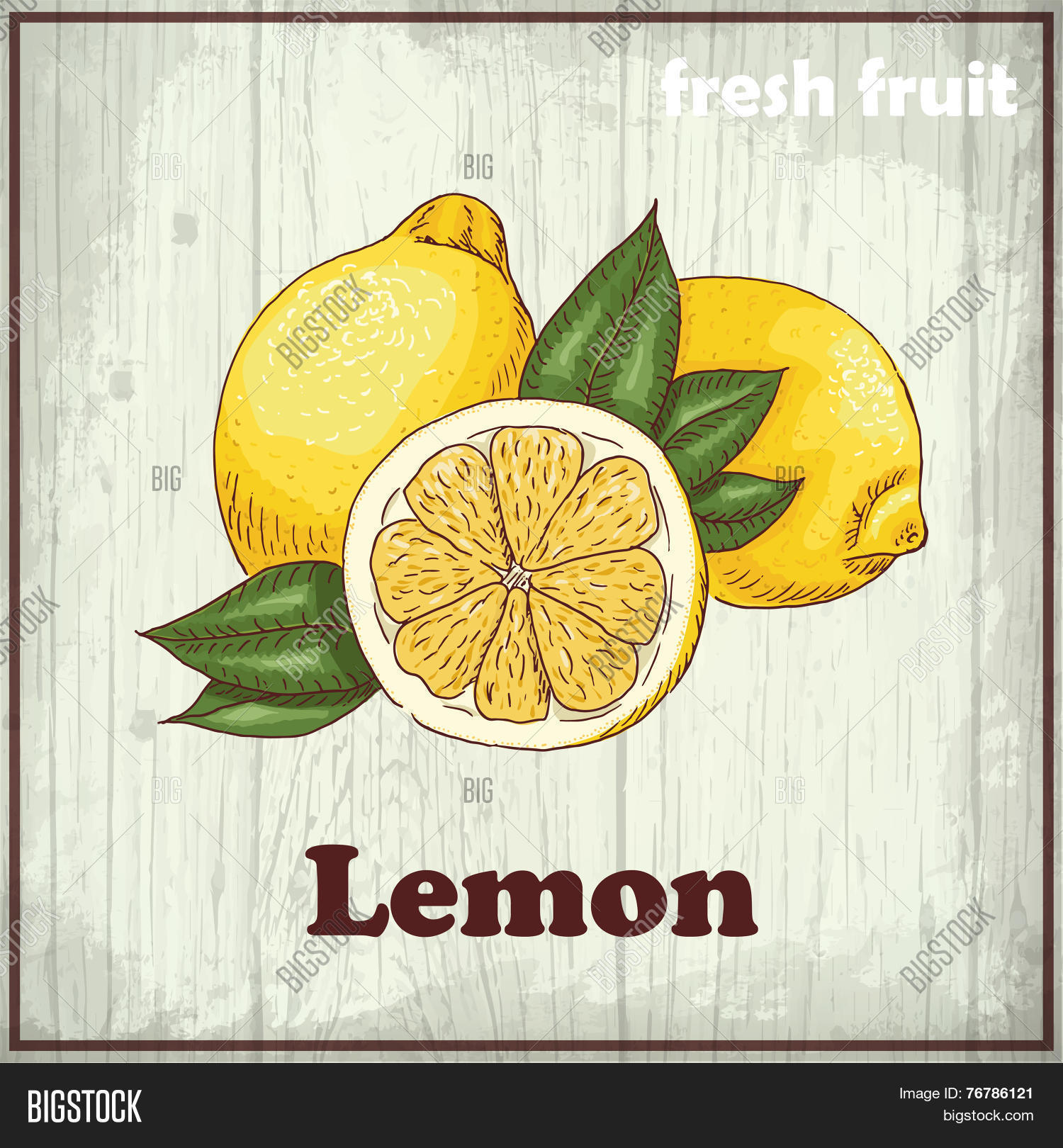 Related Keywords &amp- Suggestions for Lemon Drawing