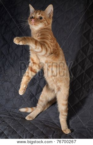 Ginger Kitten Jumping On Quilted Bedspread