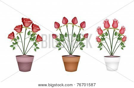 Red Roses in Tree Ceramic Flower Pots