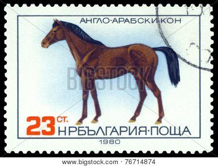 Vintage  Postage Stamp. Anglo-arabian Horse.