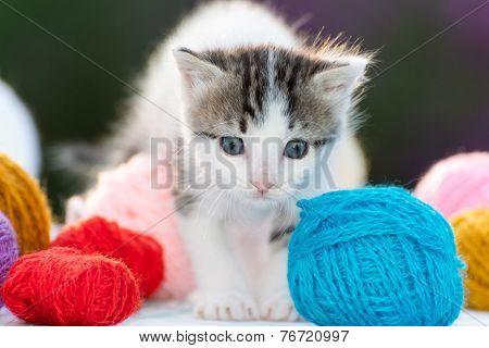 White kitten plays balls of yarn
