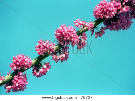 Clusters Of Flower
