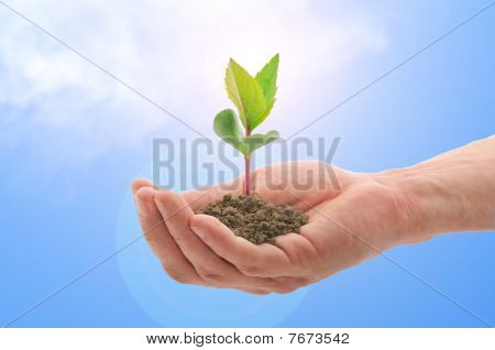 Hand With A Plant