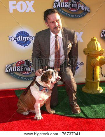 LOS ANGELES - NOV 22:  David Arquette at the FOX's