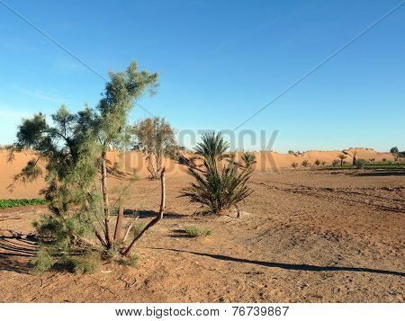 Vegetation In A Saharan Garden